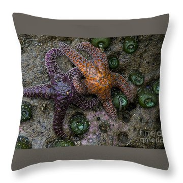 Orange And Purple Starfish II Throw Pillow