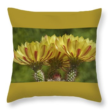 Yellow And Red Cactus Flowers Throw Pillow by Elvira Butler