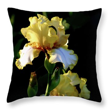 Yellow And White Irises 6681 H_2 Throw Pillow