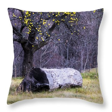 Yellow Apples Throw Pillow by Tom Singleton