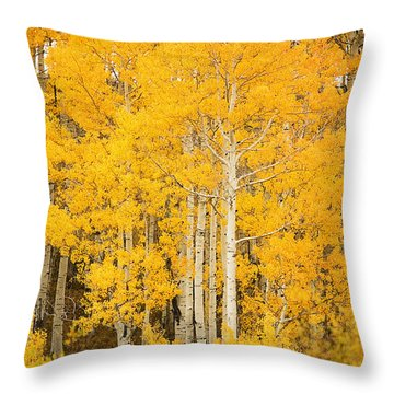 Yellow Aspens Throw Pillow by Ron Dahlquist - Printscapes