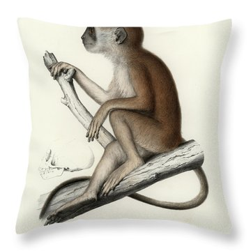 Yellow Baboon, Papio Cynocephalus Throw Pillow