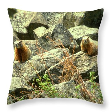 Yellow Bellied Marmots Throw Pillow