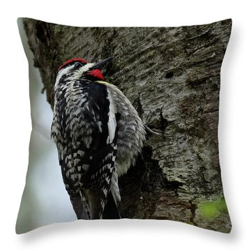 Yellow Bellied Sapsucker 2017 Throw Pillow by Bill Wakeley