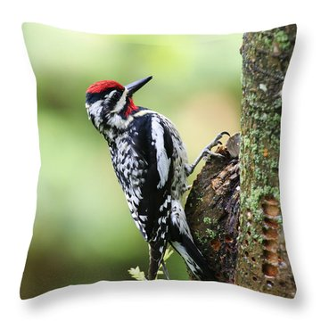 Yellow-bellied Sapsucker Throw Pillow