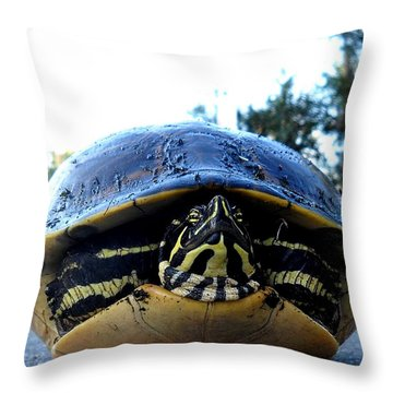 Yellow Bellied Turtle 002 Throw Pillow