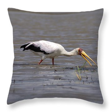 Yellow Billed Stork Wading In The Shallows Throw Pillow by Aidan Moran