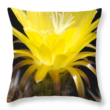 Yellow Cactus Flower Throw Pillow by Jim And Emily Bush