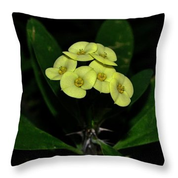 Throw Pillow featuring the photograph Yellow Cactus Flowers 001 by George Bostian