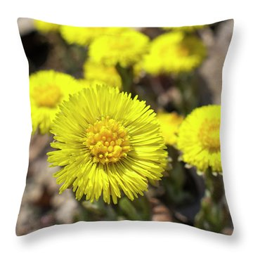Yellow Coltsfoot Flowers Throw Pillow by Christina Rollo