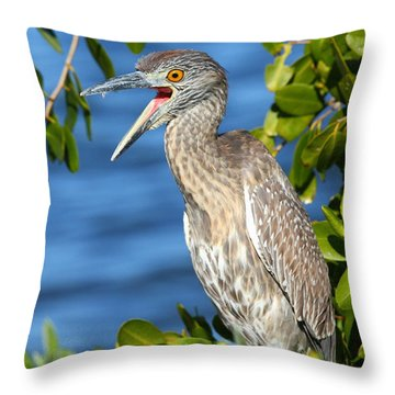 Yellow-crowned Night Heron Throw Pillow by Jennifer Zelik