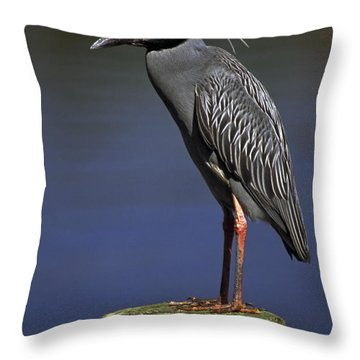 Yellow-crowned Night Heron Throw Pillow by Sally Weigand