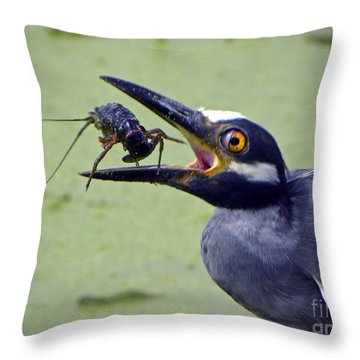 Throw Pillow featuring the photograph Yellow Crowned Night Heron  by Savannah Gibbs