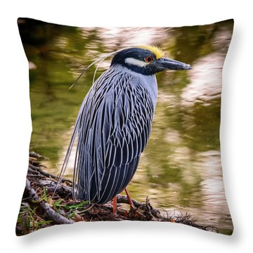 Throw Pillow featuring the photograph Yellow-crowned Night-heron by Steven Sparks