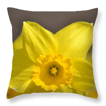 Yellow Daffodil Flower Throw Pillow