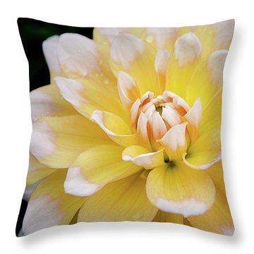 Throw Pillow featuring the photograph Yellow Dahlia White Tipped by Julie Palencia
