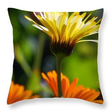 Yellow Daisy Throw Pillow by Amy Fose