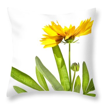Yellow Daisy Isolated Against White Throw Pillow by Sandra Cunningham