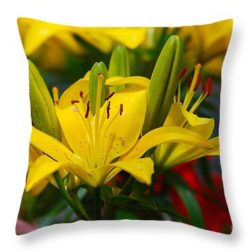 Yellow Day Lily 20120614_55a Throw Pillow by Tina Hopkins