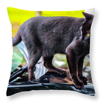 Throw Pillow featuring the photograph Yellow Eyed Cat by Madeline Ellis