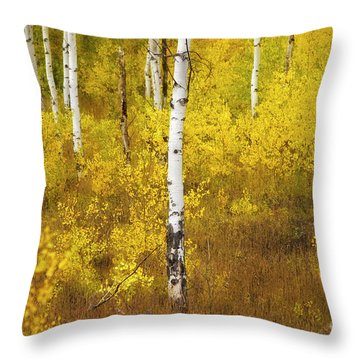 Throw Pillow featuring the photograph Yellow Fall Aspen by Craig J Satterlee