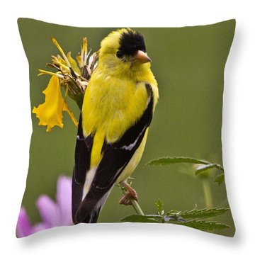 Yellow Finch - Color Impact - Artist Cris Hayes Throw Pillow
