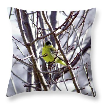 Throw Pillow featuring the photograph Yellow Finch by Bonnie Muir
