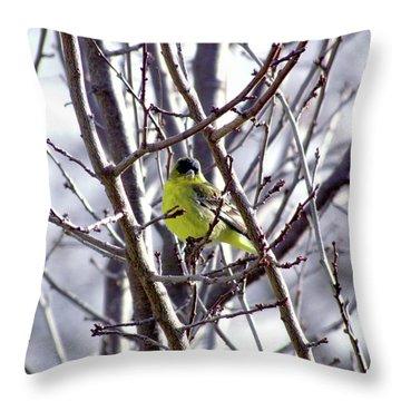 Yellow Finch Throw Pillow by Bonnie Muir