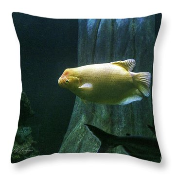 Throw Pillow featuring the photograph Yellow Fish In Tank by Richard J Thompson