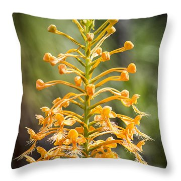 Yellow Fringed Orchid Throw Pillow by Bob Decker