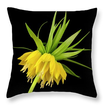 Yellow Fritillaria Imperialis Throw Pillow by Jim Hughes