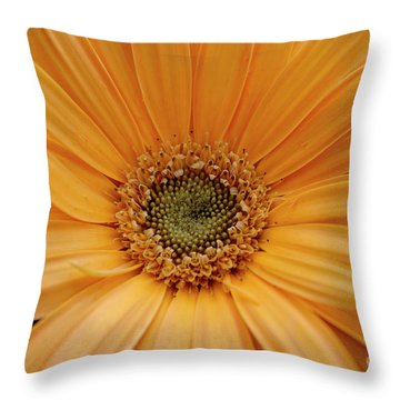 Throw Pillow featuring the photograph Yellow Gerbera Daisy by Ivete Basso Photography