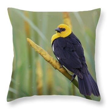 Yellow-headed Blackbird Throw Pillow