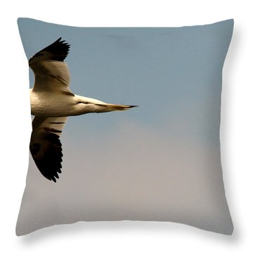 Yellow Headed Gull In Flight Throw Pillow
