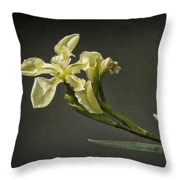 Yellow Iris Throw Pillow by Shirley Mitchell