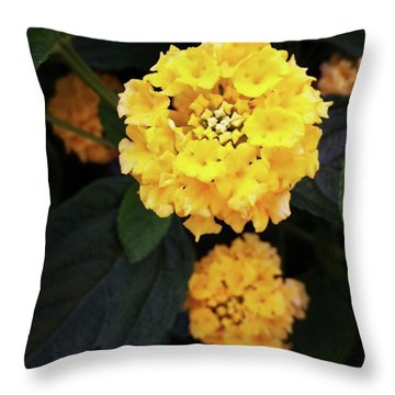 Throw Pillow featuring the photograph Yellow Lantanas Along The Scenic Drive by Mr Photojimsf