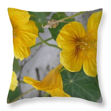 Yellow Nasturtium Throw Pillow