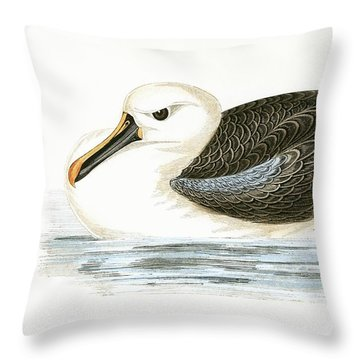 Yellow Nosed Albatross Throw Pillow by English School