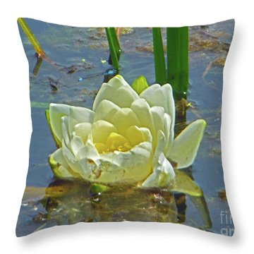 Yellow Nymphaea Alba Damselfy Throw Pillow