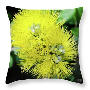 Yellow Ohia Flowers - Hawaii  Throw Pillow