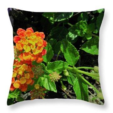 Yellow-orange Lantana Throw Pillow