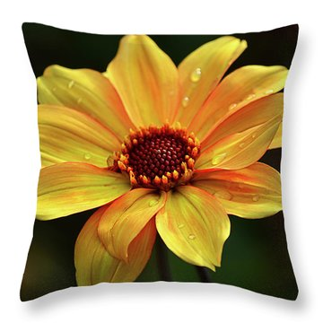 Throw Pillow featuring the photograph Yellow Petals And Drops by Julie Palencia
