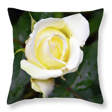 Yellow Rose 1 Throw Pillow