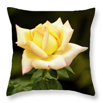 Throw Pillow featuring the photograph Yellow Rose by Bill Barber