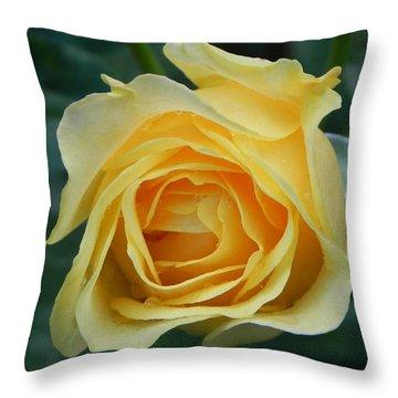 Yellow Rose Throw Pillow by John Parry