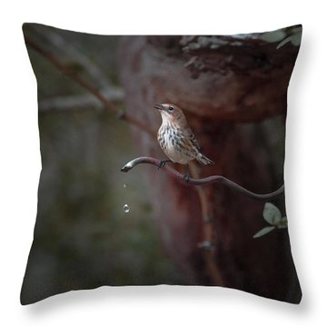 Yellow-rumped Warbler At Water Spout Throw Pillow