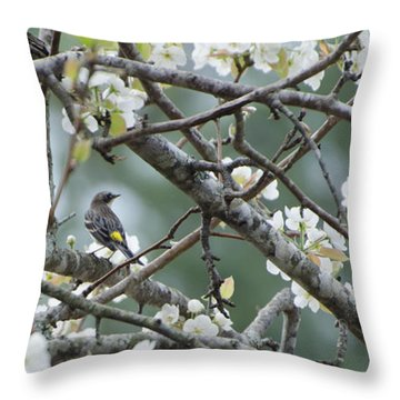 Yellow-rumped Warbler In Pear Tree Throw Pillow