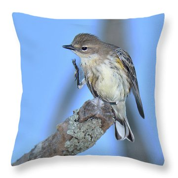 Yellow-rumped Warbler Itch Throw Pillow by Alan Lenk