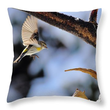 Yellow-rumped Warbler Landing Throw Pillow