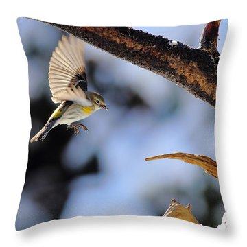Yellow-rumped Warbler Landing Throw Pillow